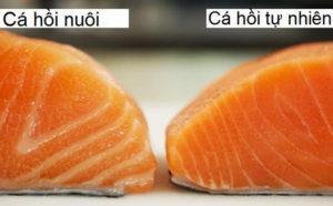 Nên chọn cá hồi nuôi hay cá hồi tự nhiên, cách phân biệt?